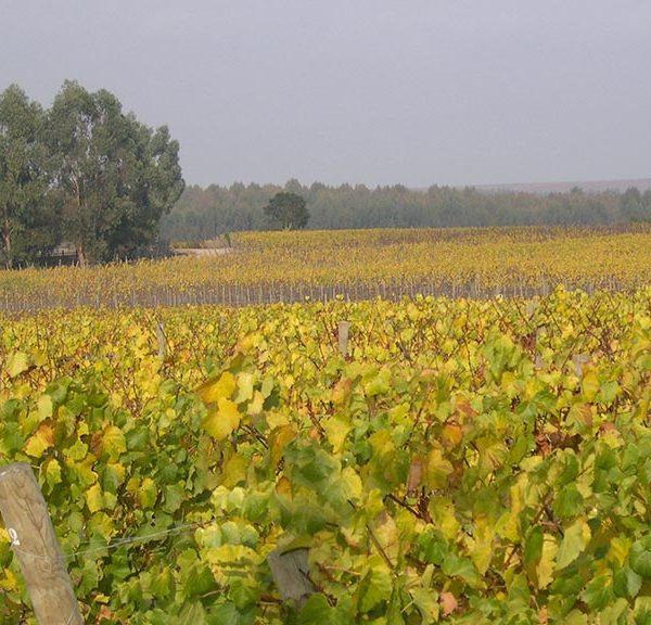 viñedosmalvilla04